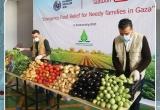 مجموعة غزة تبدأ بتنفيذ مشروع من صغار المزارعين الى الأسر المستورة في قطاع غزة